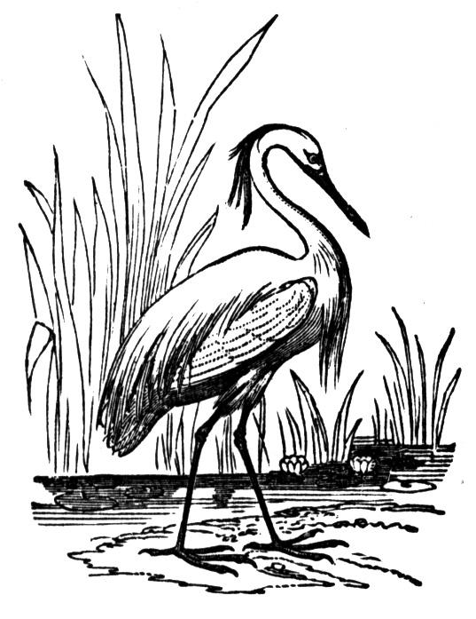 537x697 Free Heron Coloring Pages