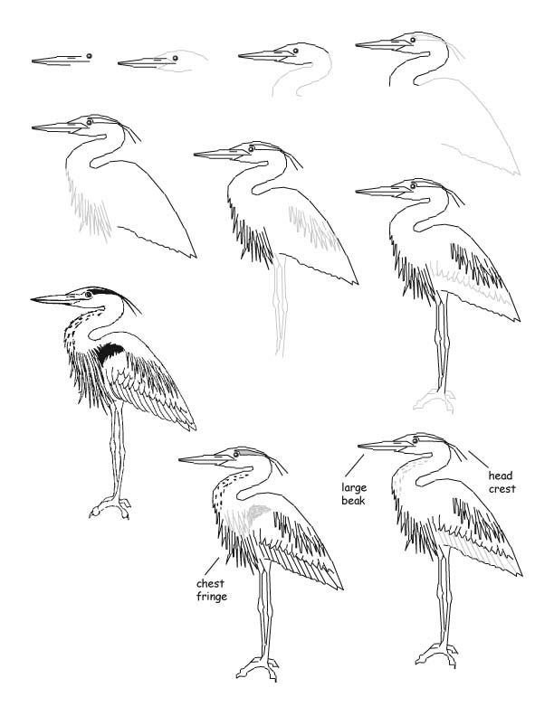 612x792 Great Blue Heron Clipart Black And White