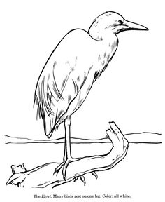 236x288 Great Blue Heron Drawing And Coloring Page Seastars And Beyond