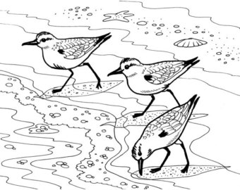340x270 Great Blue Heron Embroidery Pattern Coloring Page