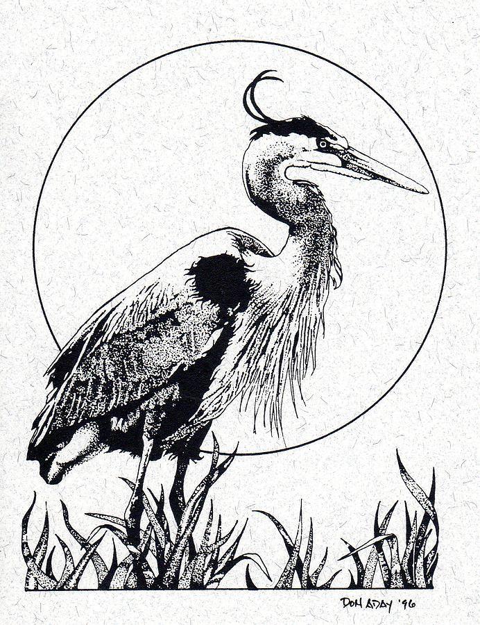 692x900 Blue Heron Drawing