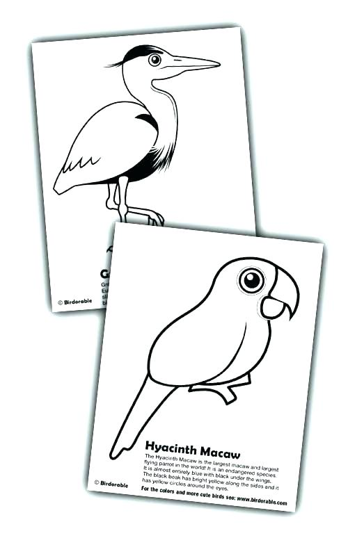 500x774 Scarlet Macaw Coloring Page