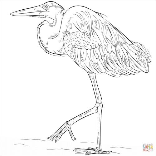 500x500 Blue Heron Coloring Page Sketch Coloring Page New Heron Coloring Page