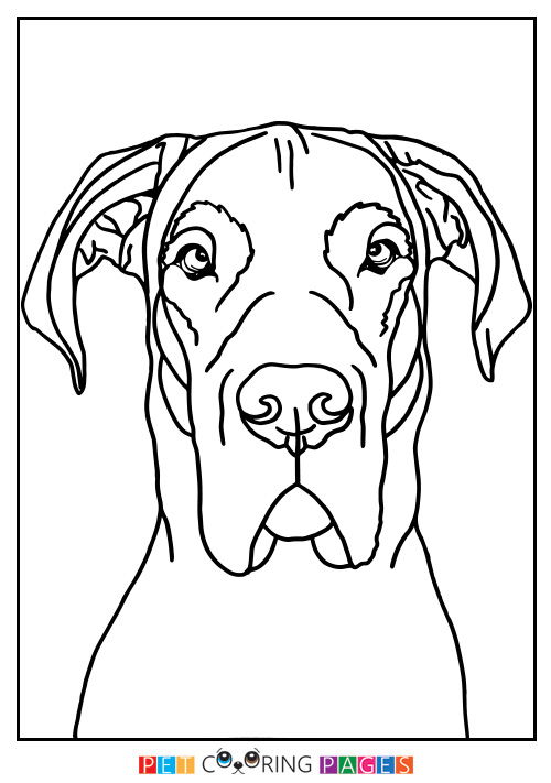 500x711 Great Dane Coloring Page Moose