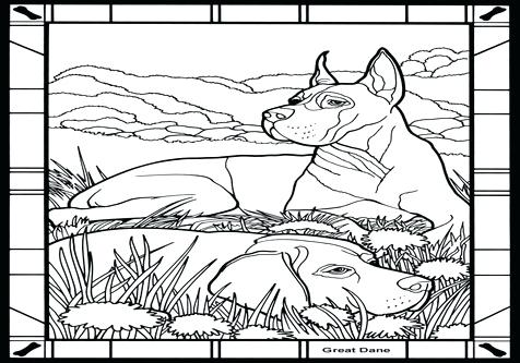 476x333 Great Dane Coloring Pages Dogs Great Mammals Coloring Pages