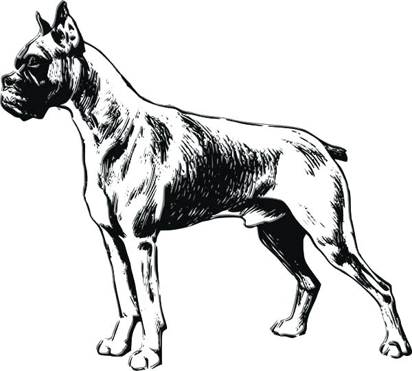 600x541 Great Dane Coloring Pages Great Coloring Book Coloring Pages Great