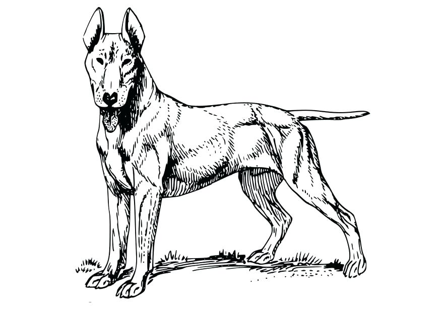 875x620 Great Dane Coloring Pages Great Coloring Great Coloring Page Great