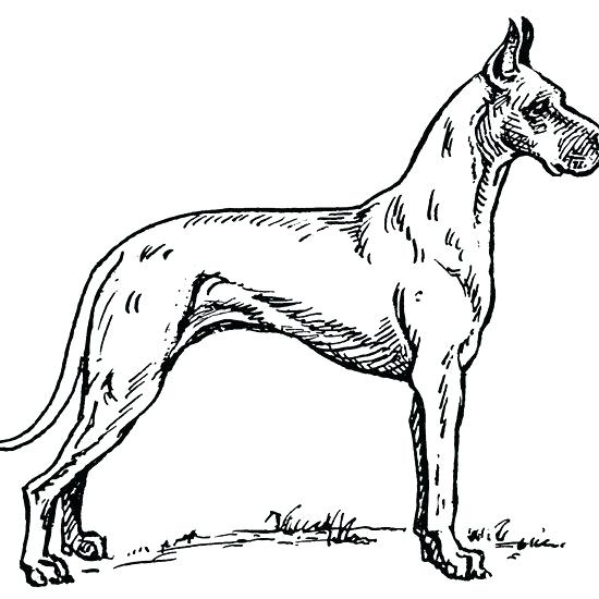 550x550 Great Dane Coloring Pages