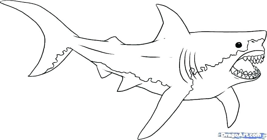 878x462 Great White Shark Coloring Ing Ing Ing Great White Shark Attack