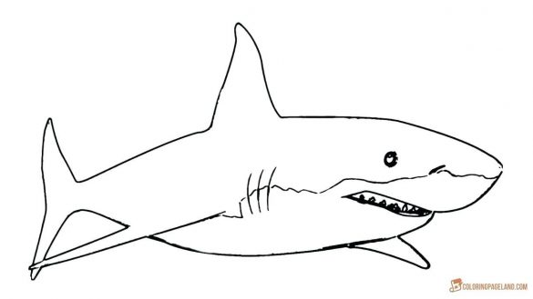 585x329 Great White Shark Coloring Pages Free Great White