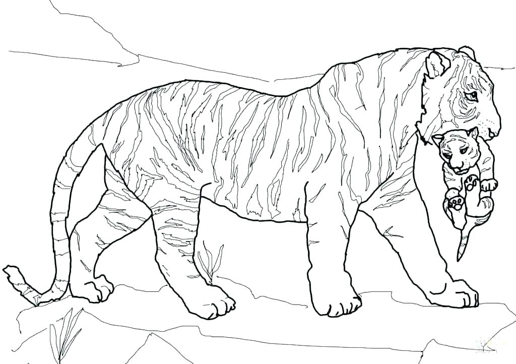 1024x722 Printable Shark Coloring Pages Tiger Coloring Pages To Print Tiger