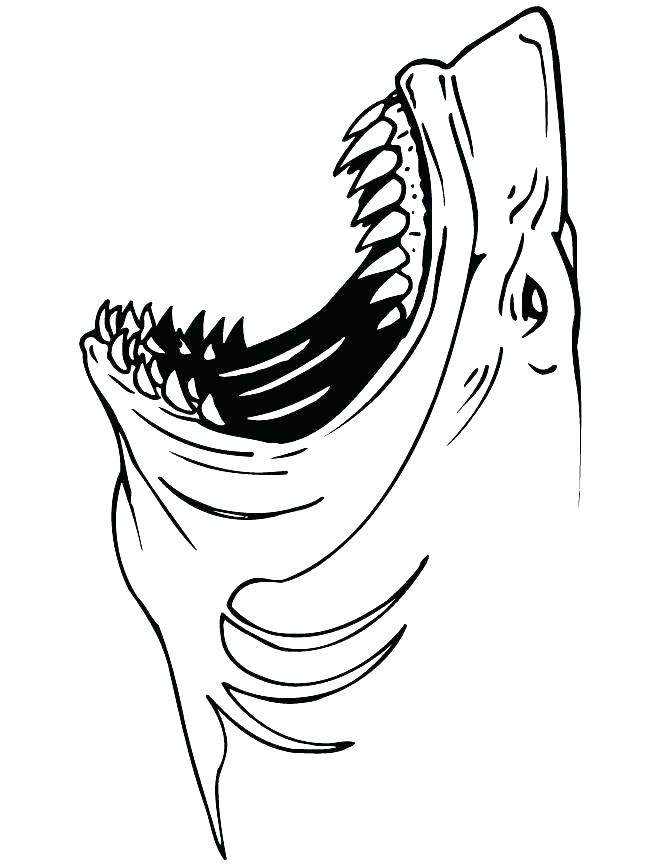 670x867 Printable Shark Coloring Pages
