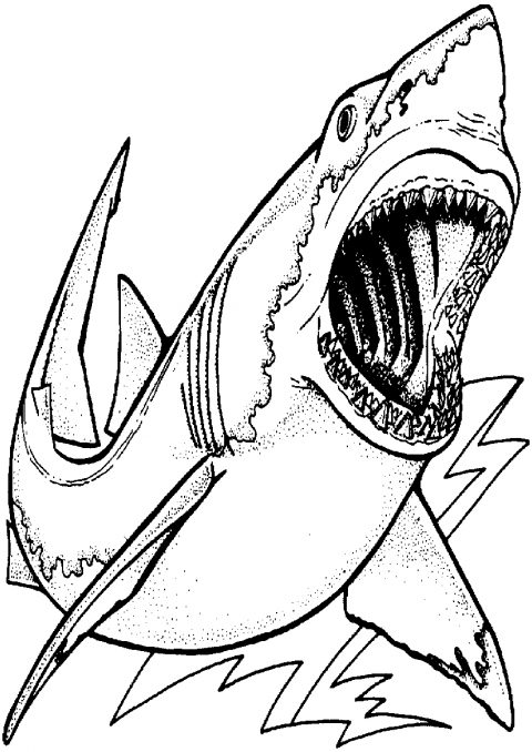 480x678 Realistic Great White Shark Coloringges Free Printable Sharks