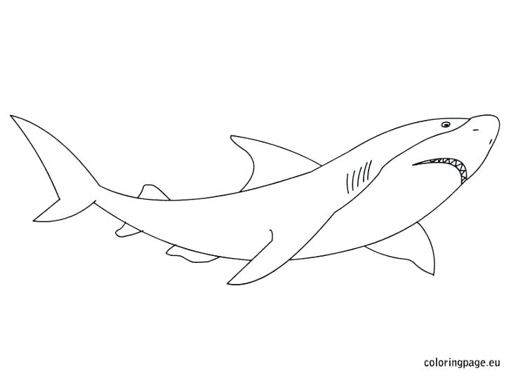 728x539 Shark Color Page Shark Color Page Free Shark Coloring Pages Great