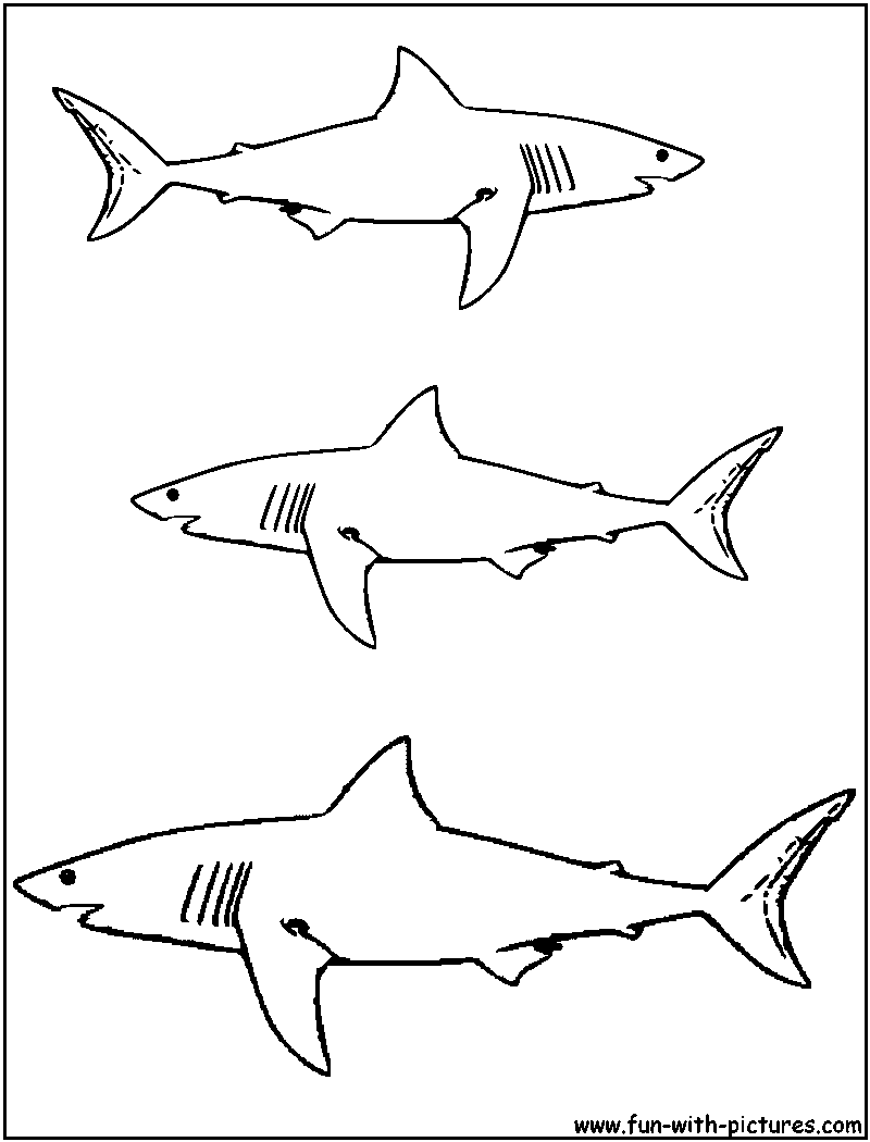 Great White Shark Coloring Page At Getdrawings Com Free For