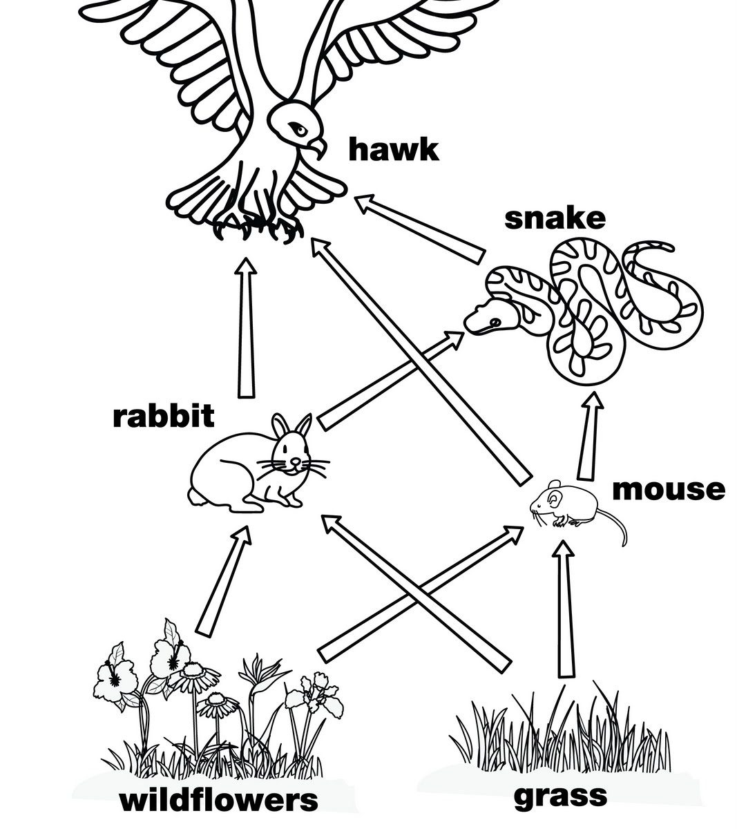 1067x1200 Food Chain Coloring Page Food Chain Coloring Sheets Pages Web
