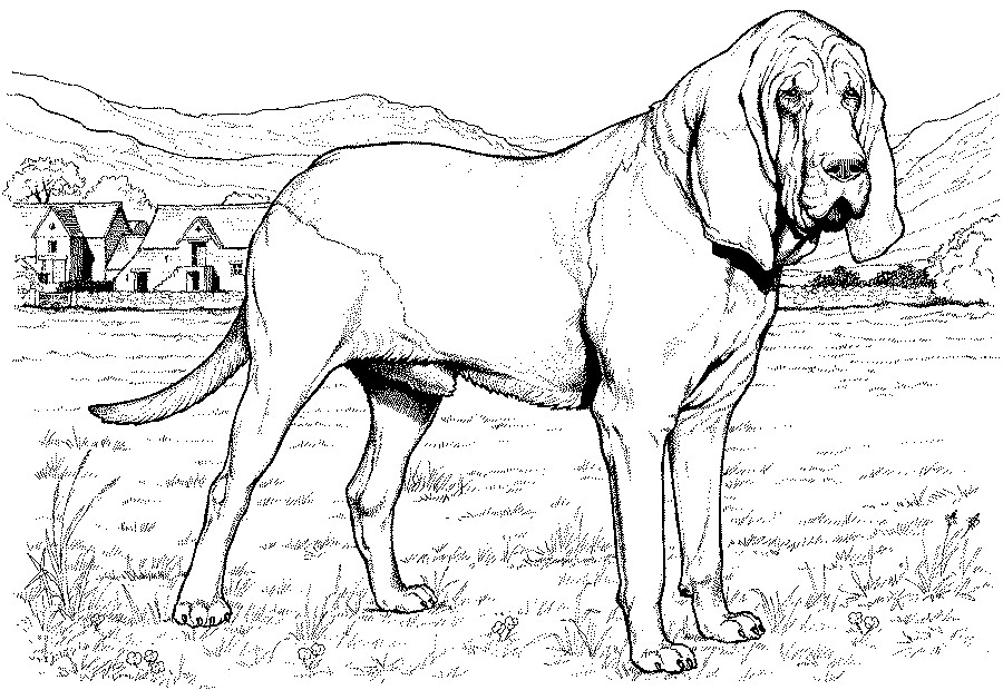900x620 Greyhound Animal Coloring Pages Italian Greyhound Coloring Page