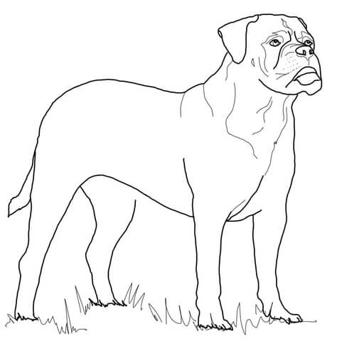 474x480 Greyhound Coloring Pages Inspirational Bullmastiff Coloring Page