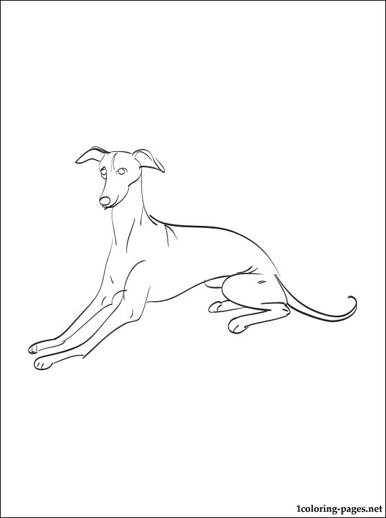 560x750 Greyhound Coloring Page Coloring Pages