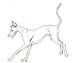 240x210 Happy Greyhound Coloring Book Page This Is A Drawing I