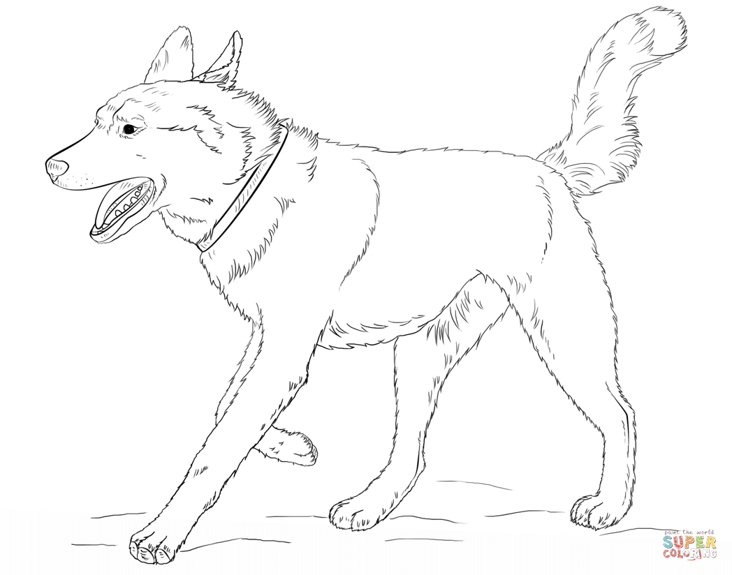 1048x824 Siberian Husky Coloring Pages Gallery Coloring For Kids
