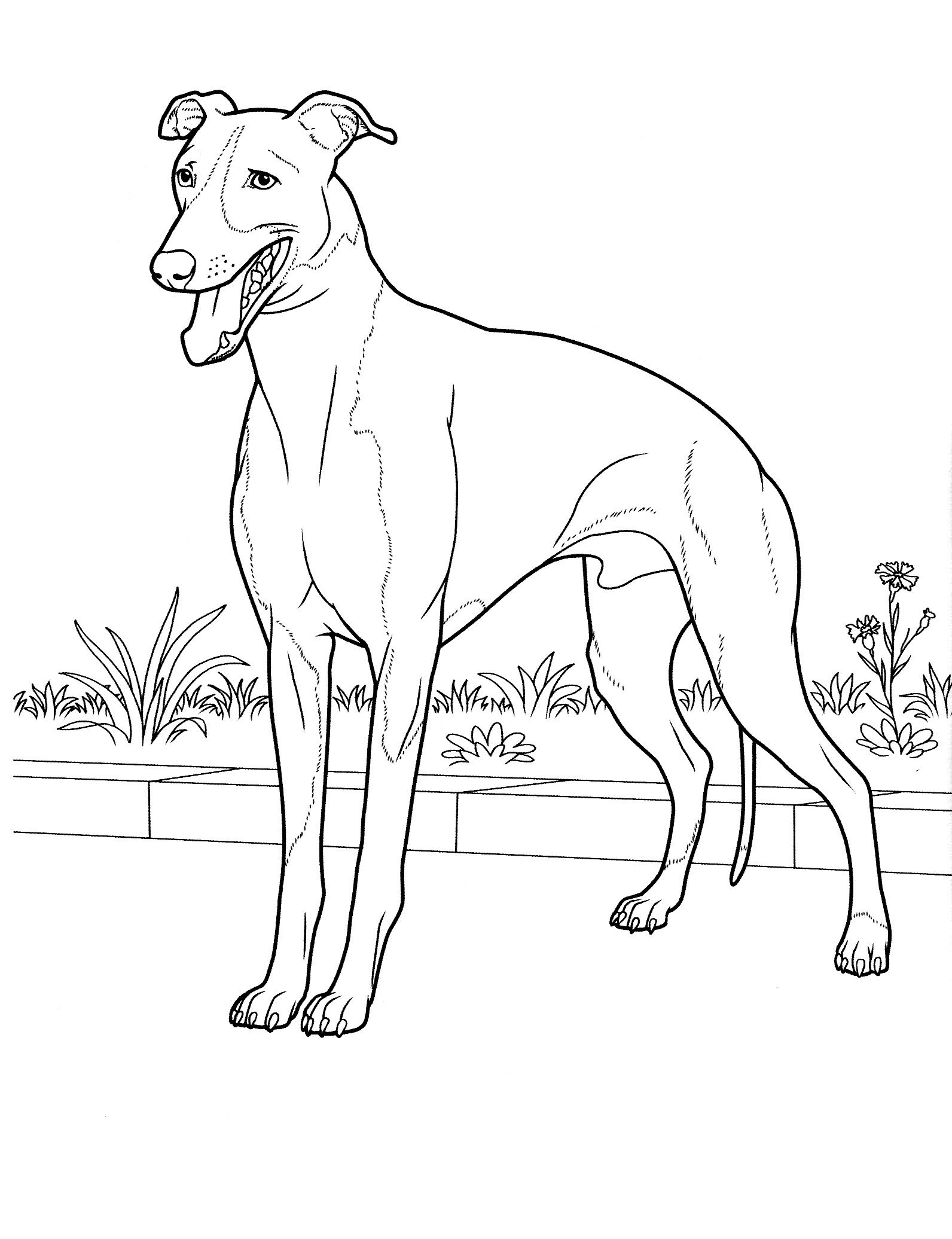 1592x2072 Dog Coloring Pages Teenagers Coloring Pages Coloring Pages