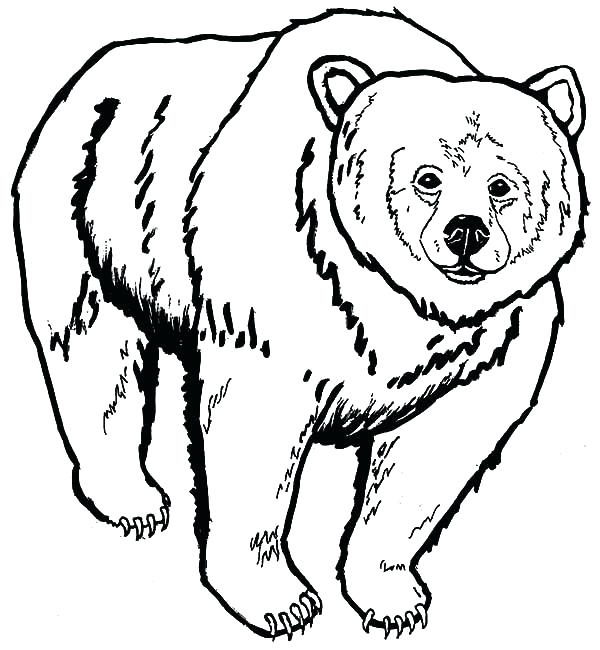 600x650 Coloring Picture Of A Bear Grizzly Bear Coloring Pages As Well As