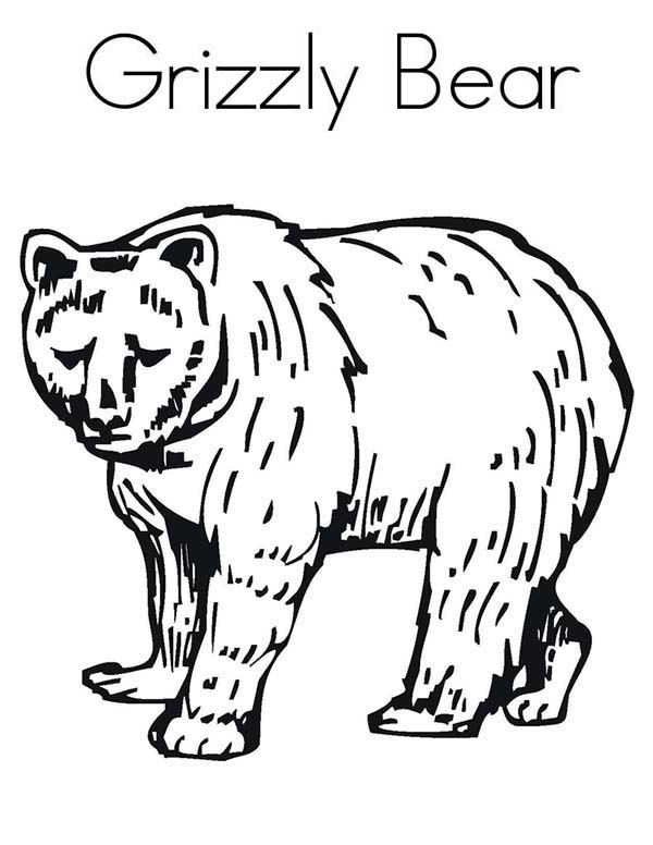 600x776 Enormous Grizzly Bear Coloring Page