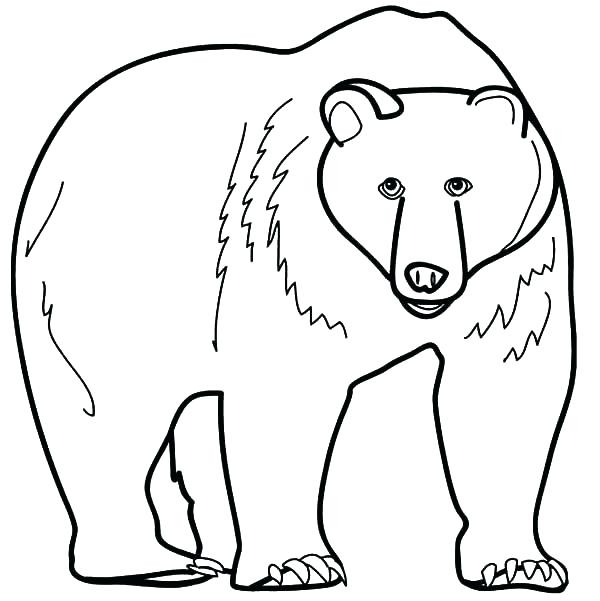 600x601 Grizzly Bear Coloring Page Coloring Grizzly Bear Coloring Page