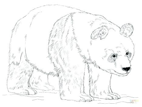 468x354 Grizzly Bear Coloring Page Grizzly Bear Coloring Page Bear Is