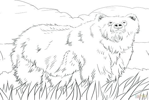 520x350 Grizzly Bear Coloring Pages