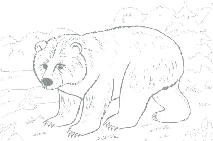 Grizzly Coloring Pages