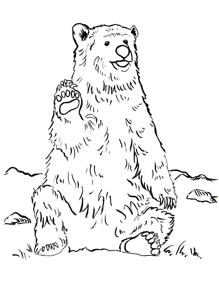 760x985 Grizzly Bear Coloring Page Also Grizzly Bear Coloring Page Grizzly