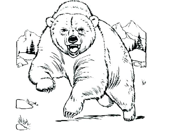 Grizzly Coloring Pages at GetDrawings Free for
