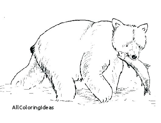 529x404 Grizzly Bear Coloring Page Grizzly Bear Coloring Pages Coloring