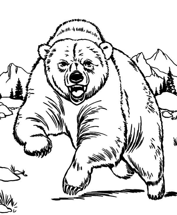 600x727 Grizzly Bear Coloring Pages Grizzly Bear Coloring Page Printable