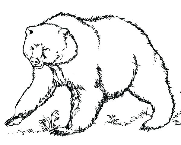 600x479 Grizzly Bear Coloring Pages Plus Polar Bears Coloring Pages