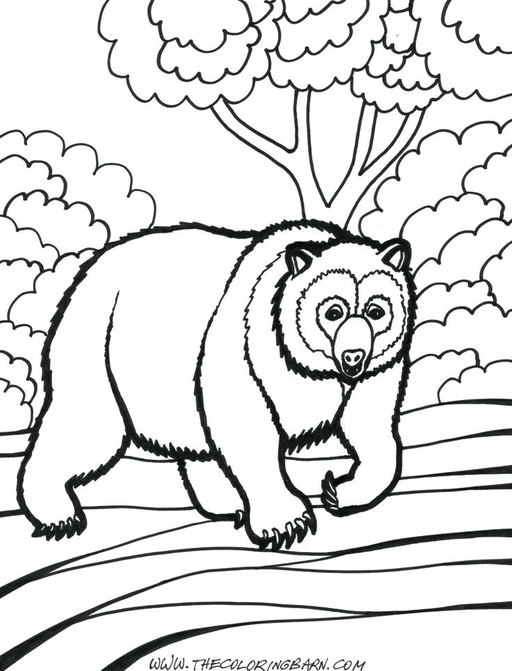 736x964 Grizzly Bear Pictures To Color Polar Bear Coloring Pages For Kids