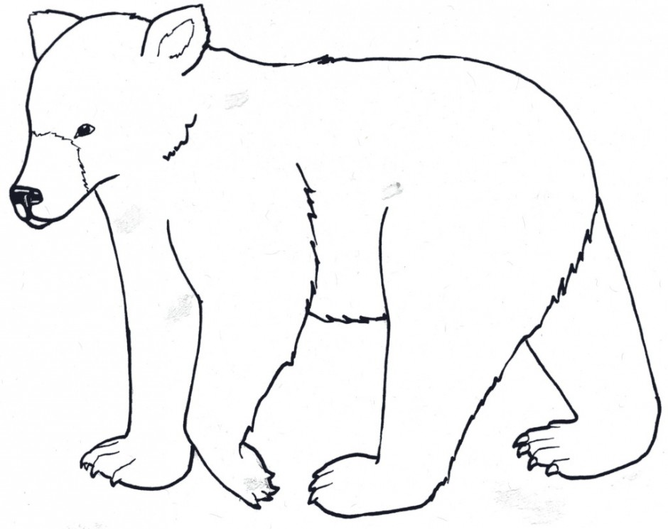 940x745 Grizzly Bear Clipart Colouring