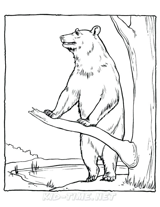 612x792 Bear Coloring Pages Coloring Pages Collection