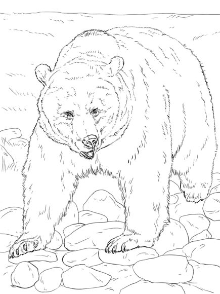 435x580 Big Grizzly Bear Free Coloring Page Adults, Animals, Kids