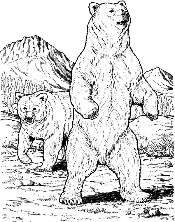 600x760 Grizzly Bear Protect His Mate