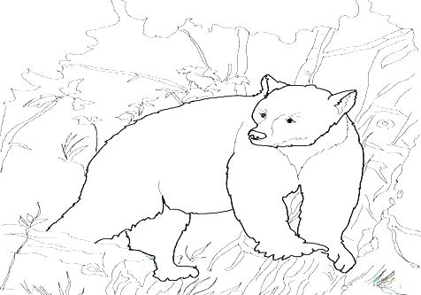 476x333 Black Bear Coloring Page Black Bear Coloring Page Coloring Pages