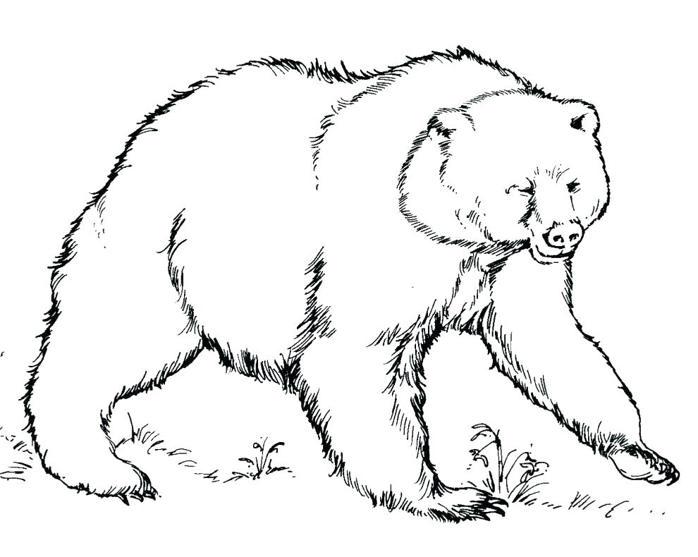 990x790 Free Printable Grizzly Bear Coloring Pages Kids Coloring Grizzly