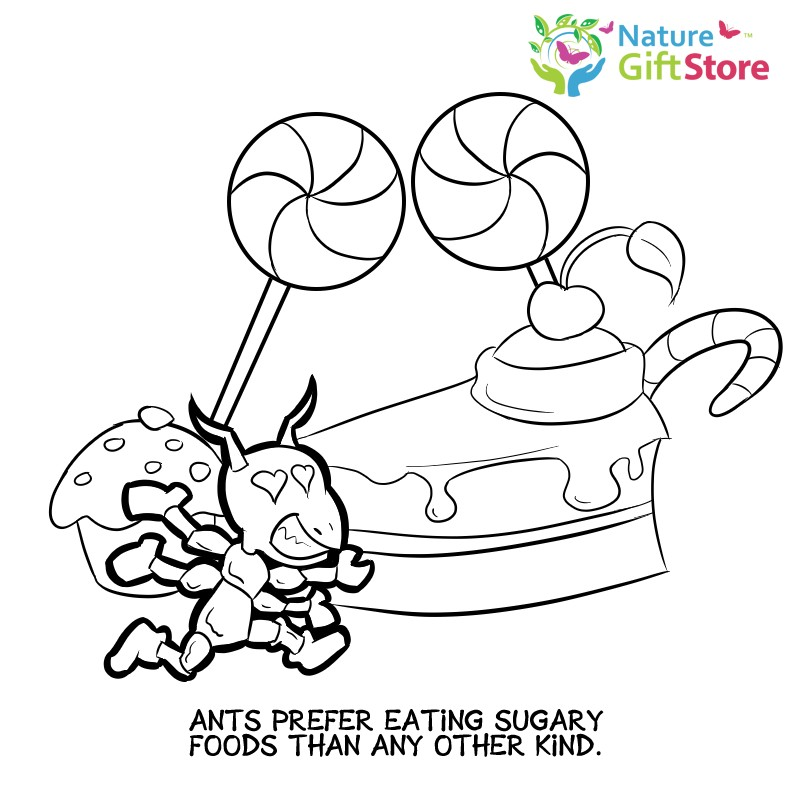 792x792 Grocery Shopping Coloring Pages Unique Printable Coloring Pages
