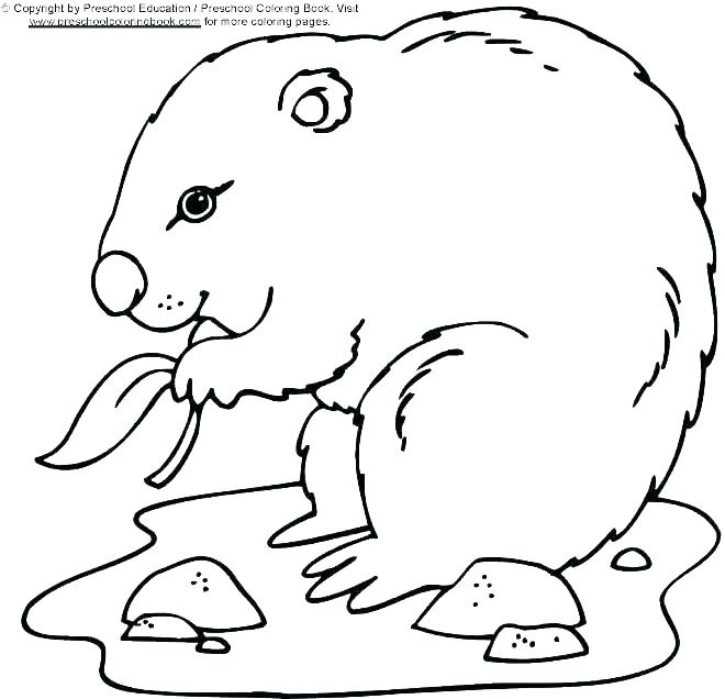 660x636 Groundhog Coloring Pages Groundhog Day Coloring Pages Marmot Page