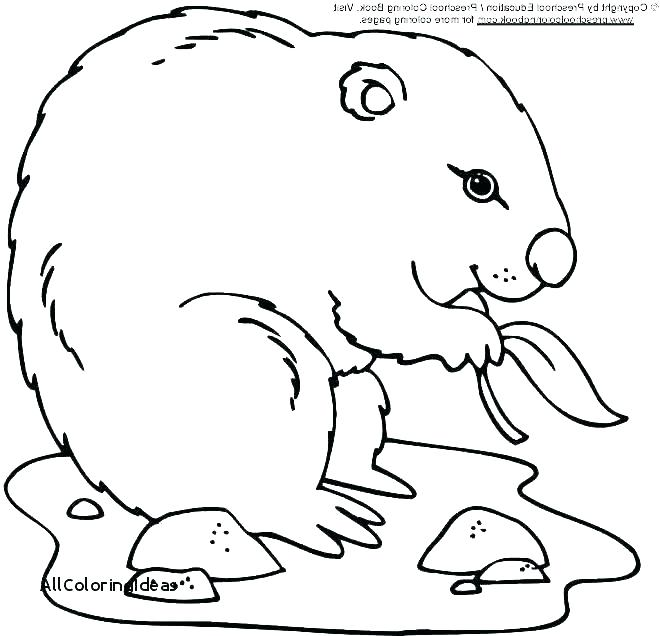 660x636 Groundhog Coloring Pages Groundhog Day Colouring Page Happy