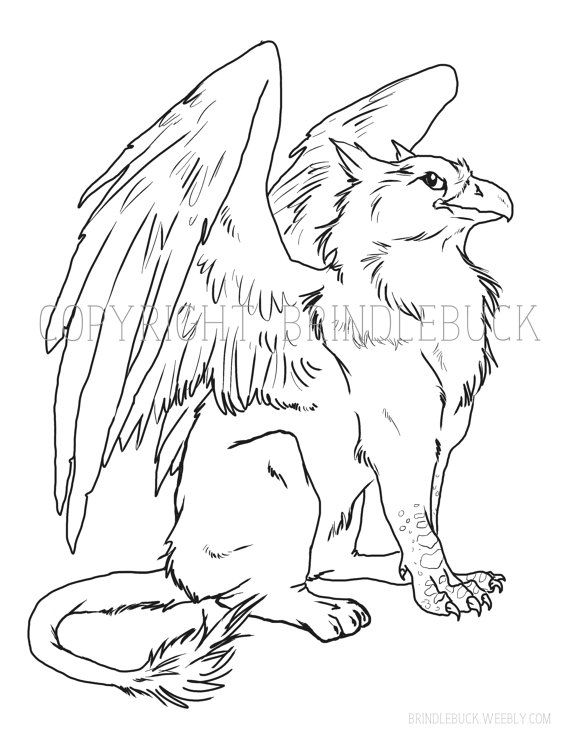 570x738 Gryphon Coloring Page Download Child Art Adult