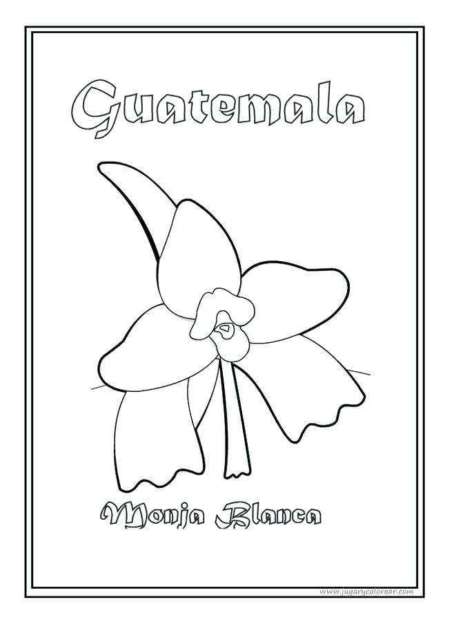 658x900 Flag Guatemala Coloring Page National Symbol White Nun Flower Top