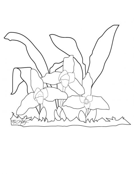 468x605 Monja Blanca National Flower Of Guatemala Coloring Page